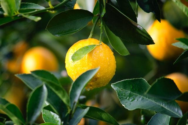 Cepat dan Tepat: Cara Membuat Air Lemon Ini Bisa Kamu Coba!