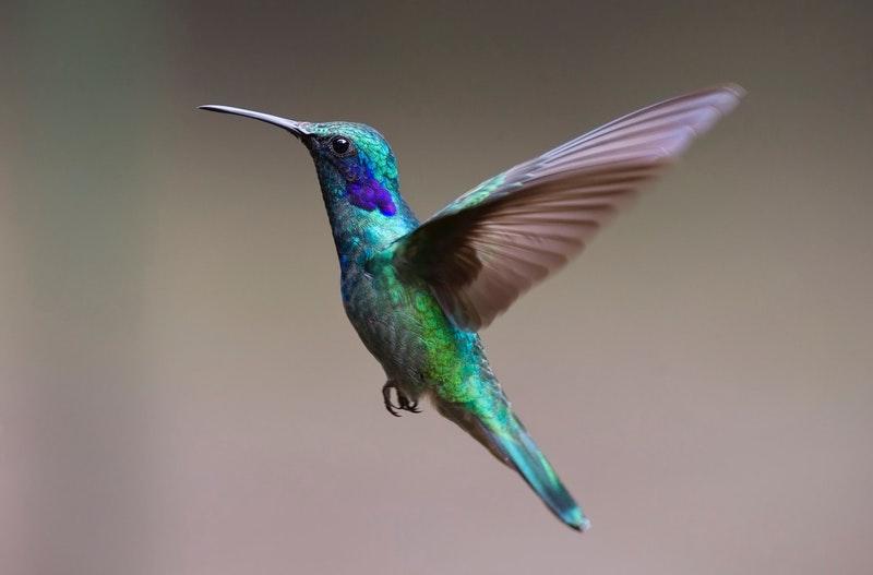 4 Jenis Burung Kepodang Yang Paling Populer