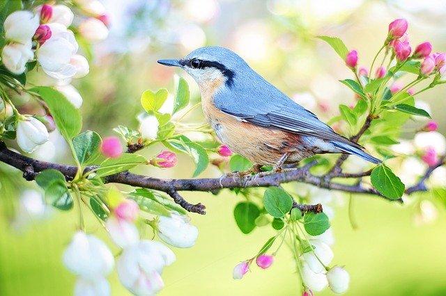 Klasifikasi Burung Pipit