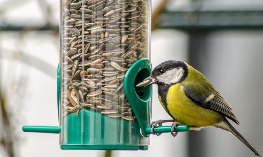 Mengenal Karakteristik dan Suara Burung Blackthroat