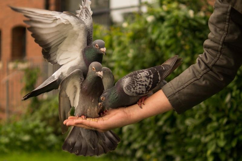 Inilah Suara Burung Cililin Yang Paling Pas Dijadikan Suara Pemasteran