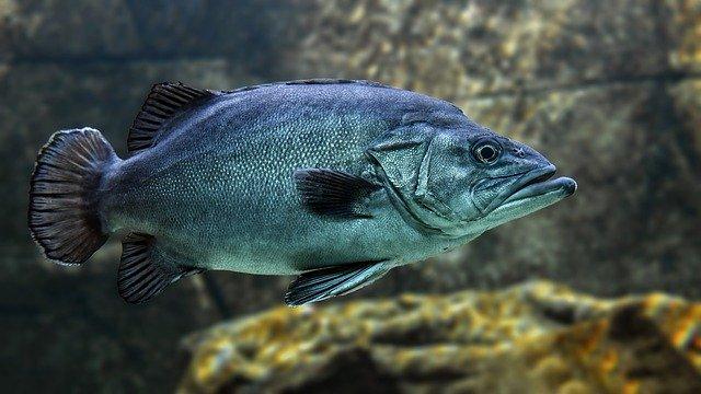 Cara Mengkonsumsi Minyak Ikan Yang Benar Sesuai Anjuran