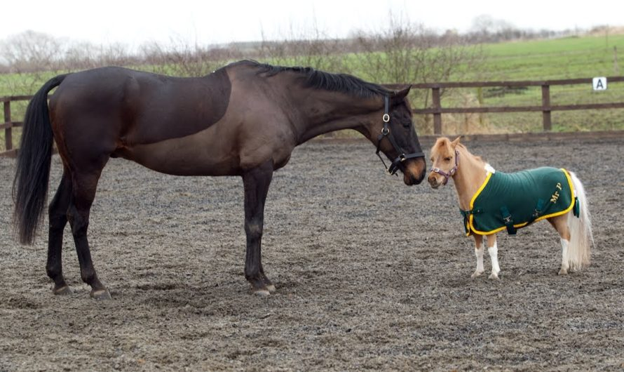 The Best Horse and Pony Breeds for Kids